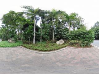 热带树2全景