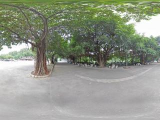 热带树5全景