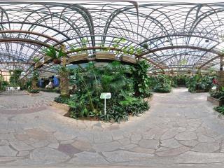 四季植物馆观音莲座蕨全景