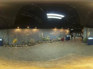 贝壳展区2