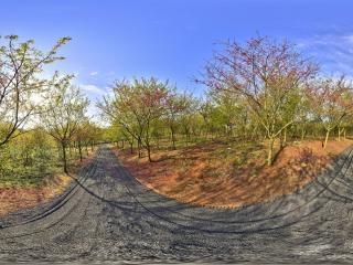 桂阳樱花园虚拟旅游