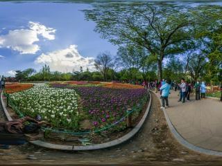 北京—海淀植物园郁金香文化节06全景
