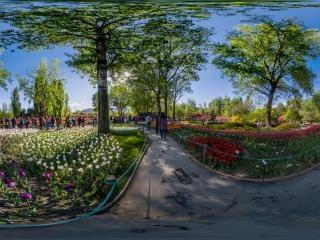 北京—海淀植物园郁金香文化节07全景