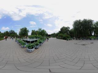 北京—海淀区圆明园去赏荷花全景