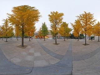 北京—朝阳区朝阳公园银杏林