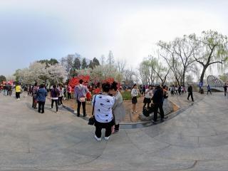 北京—玉渊潭公园之春全景