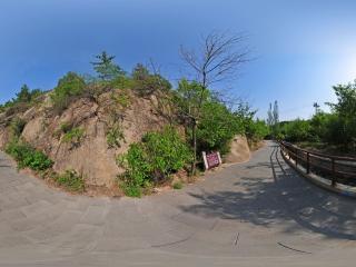角闪二长花岗岩