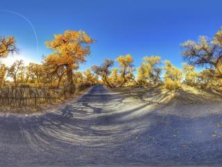 大漠明珠—胡杨林全景