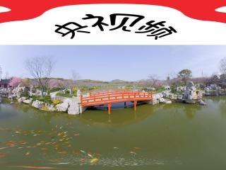 东湖樱花园樱花7全景