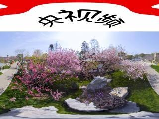东湖樱花园樱花2全景