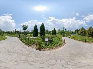 初夏—玉渊潭公园(十六)全景