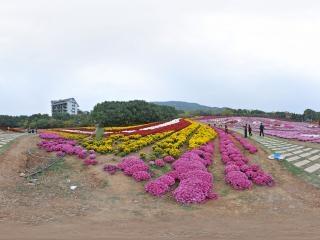 禾泉农庄-赏菊全景