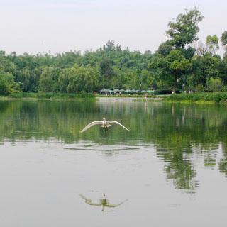 浣花溪公园虚拟旅游