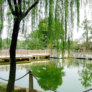 滨湖公园虚拟旅游