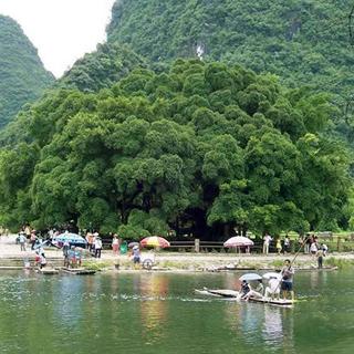 大榕树景区虚拟旅游